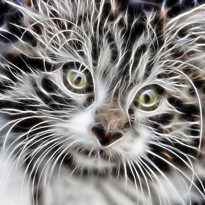 cropped-kitten_fractal