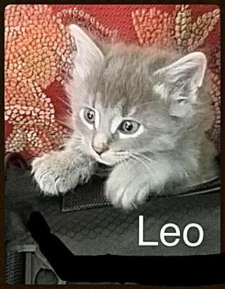 Kitten no 4