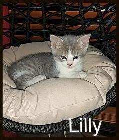Kitten no 2